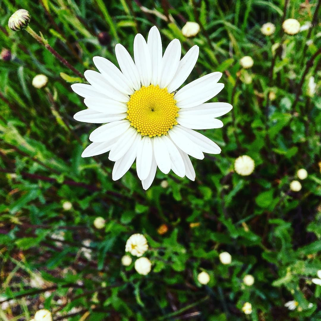 Spotted_by_the_roadside_on_my_walk_last_week._A_simple_flower_by_the_roadside._Probably_unnoticed_by_swarms_of_cars_and_people._Beauty_can_be_found_where_you_least_expect_it.